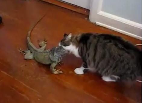 Невероятная дружба животных